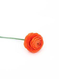smuk orange ranunkel papirsblomst håndlavet med kærlighed i Ukraine
